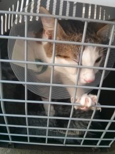 Yumi après l'opération