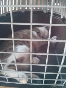 Yumi qui se repose enfin (sans sa collerette !)