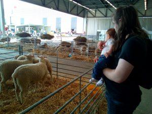 La découverte des animaux de ferme 2